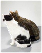 Soins préventifs chat