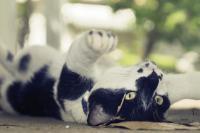 convulsions chez le chat