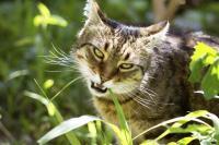 medecines douces pour les chats