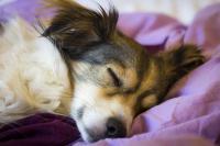 sommeil du chien